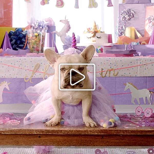 Vitalant TV commercial featuring talking French bulldog